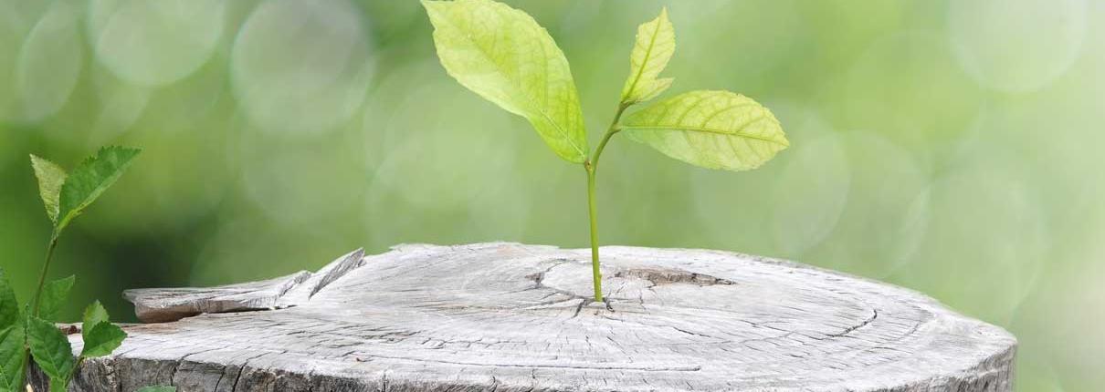 Change mit ILTIS - Damit aus Strategien Handeln wird